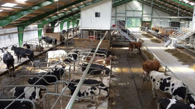 100 Baş Kapasiteli Tam Teşekküllü Modern Süt ve Besi Ahır Projesi