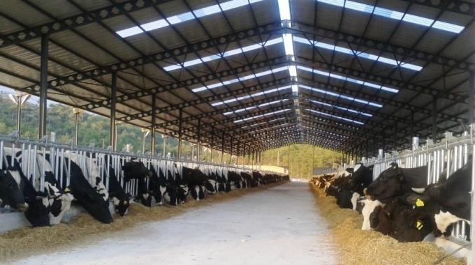 50 Başlık Besi Ahır Projesi Maliyeti, Besi Hayvancılığı TKDK Projeleri