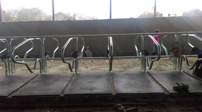 50-100-150-200-250 Başlık Süt ve BESİ Sığırcılığı Projesi + İnşaat Maliyeti
