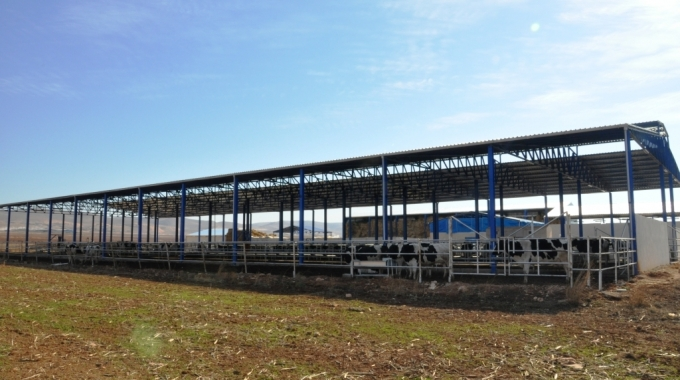 20 Büyükbaşlık Sığır Ahır Maliyeti, 20 İneklik Süt Sığırcılığı Ahır Projesi ve Fiyatları