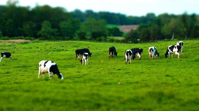 Süt İnekçiliği Ahır Projeleri ve Anahtar Teslim Yapım Fiyatları 2016