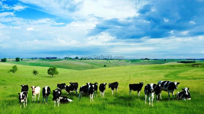 Büyükbaş Hayvan Çiftlik Sistemleri, Ahır Proje Örnekleri ve Anahtar Teslim Fiyatları 2016