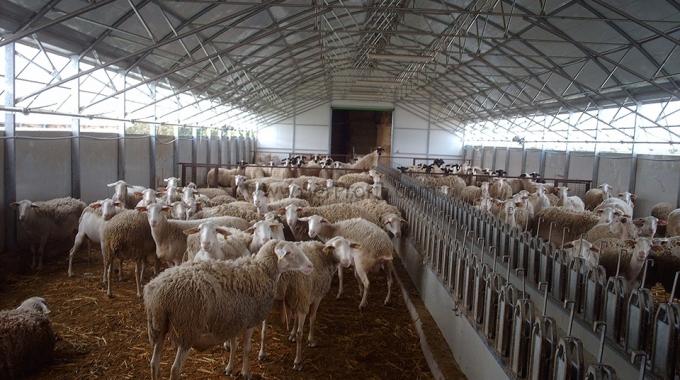 Koyun Ağılı Projesi Fiyatı, Koyun Ağılı Maliyetleri Fiyatları 2016