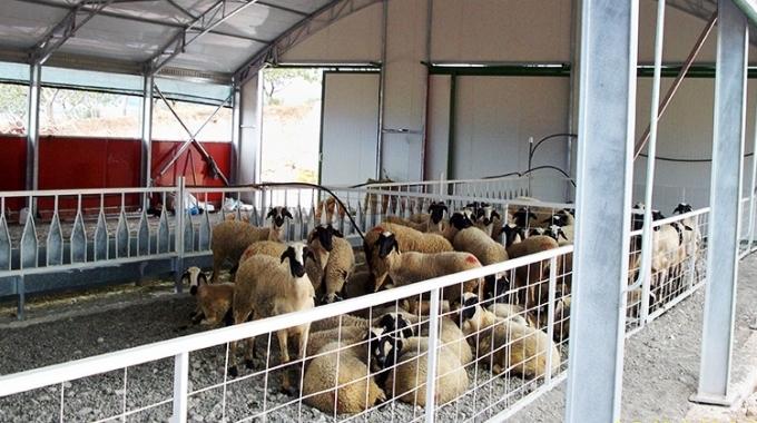 Koyun Keçi Yetiştiriciliği Projeleri, Koyun Keçi Ağıl Maliyetleri Yapım Fiyatları