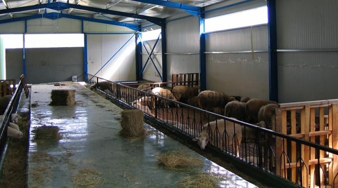 Küçükbaş Hayvan Barınakları, Modern Koyun Çiftliği Fiyatları