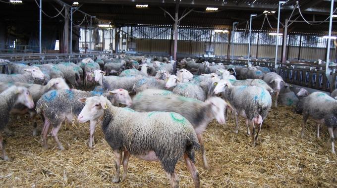 Küçükbaş Hayvancılık Çiftlikleri Projeleri ve Anahtar Teslim İnşaat Maliyeti Fiyatları