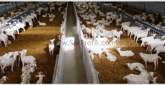 100-300-3000 Baş Küçükbaş Hayvan Et ve Süt Besiciliği Hayvancılık Anahtar Teslim Maliyeti Fiyatları
