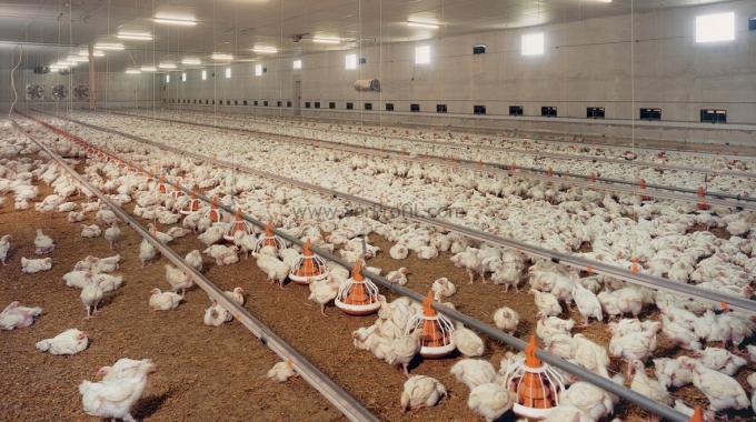 Prefabrik ÇELİK Broiler Yumurta Tavuk Çiftliği Projeleri ve Yapım Fiyatları