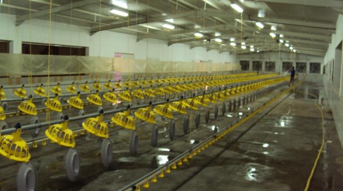 25000 (25 Bin) Adet Prefabrik ÇELİK Tavuk Çiftliği Kurulumu İnşaat Maliyeti Fiyatları