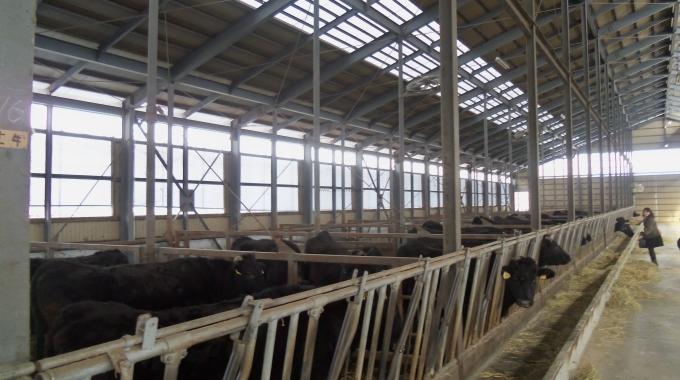 20×20m 400 m2 Besihane Projeleri ve Maliyeti
