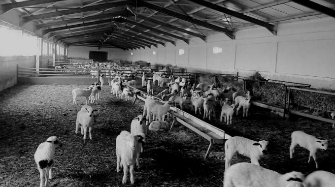 100 Başlık Koyun KEÇİ Çiftliği Projeleri ve İnşaat Maliyeti 2017