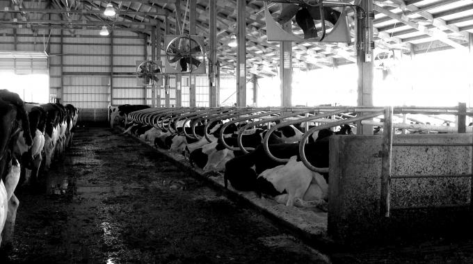 100 Başlık Besi Çiftliği Maliyeti Projeleri ve Yapım Fiyatları 2017