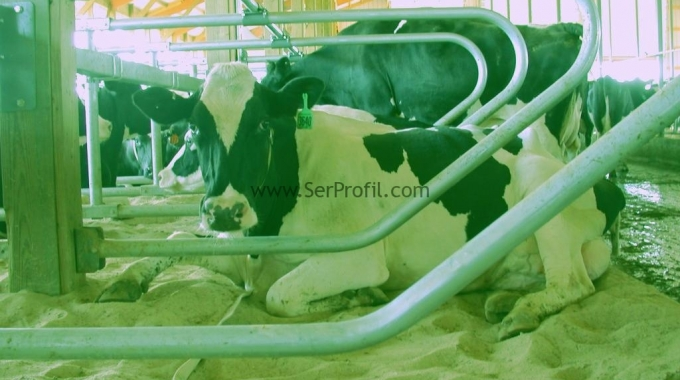 120 Başlık Süt Üretim Çiftligi 2017 Anahtar Teslim Fiyatları