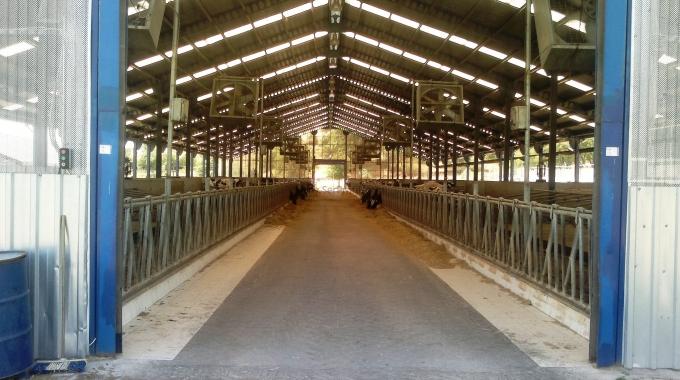 Açık Besi Çatı Modelleri Planları Çelik Çatı Projesi Maliyetleri Fiyatları