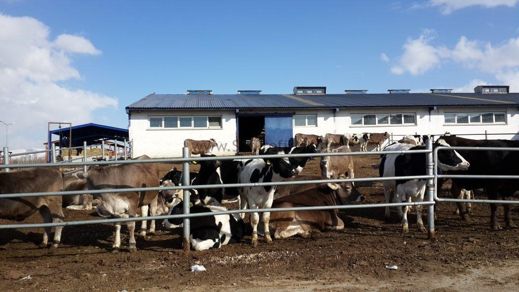 Açık Besi Ahır Çiftlik Proje İnşaat Maliyet Hesapları, Açık Besi Ahır Çiftlik Proje İnşaat Maliyet, Açık Besi Ahır Çiftlik Proje İnşaat Hesapları, Açık Besi Ahır Çiftlik Proje Maliyet Hesapları, Açık Besi Ahır Çiftlik İnşaat Maliyet Hesapları,   açık besi maliyet hesapları, besi danası ahır çiftlik maliyeti, besi çiftliği kurma maliyeti, büyükbaş besicilik maliyetleri, büyükbaş besicilik karlı mı, besi danası çiftlik  maliyeti 2017, büyükbaş hayvan ahır projemaliyeti, besicilik maliyeti 2017, besi çiftliği projesi örnekleri,