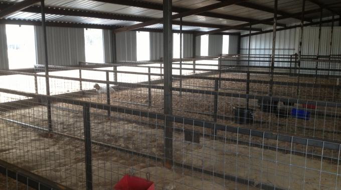 100 Küçükbaş Koyun Keçi MODERN Ahır Projeleri Barınak Maliyeti
