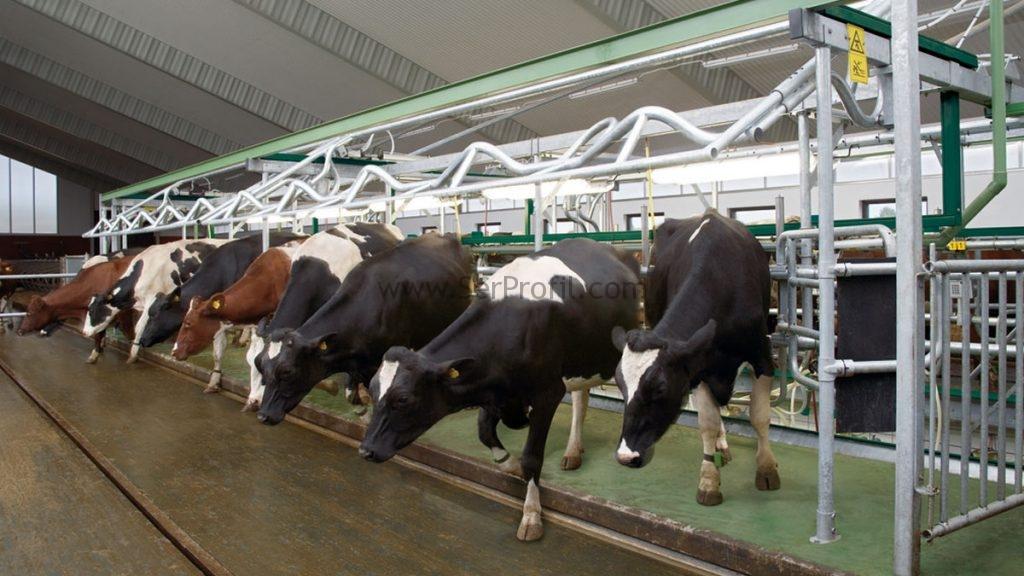 Modern Büyükbaş Küçükbaş Anahtar Teslim Çiftlik Danışmanlık Proje ve İnşaat Fiyatları, Modern Küçükbaş Anahtar Teslim Çiftlik Danışmanlık Proje ve İnşaat Fiyatları, Modern Büyükbaş Anahtar Teslim Çiftlik Danışmanlık Proje ve İnşaat Fiyatları, Modern Büyükbaş Küçükbaş Çiftlik Danışmanlık Proje ve İnşaat Fiyatları, Modern Büyükbaş Küçükbaş Anahtar Teslim Çiftlik Danışmanlık Fiyatları, Modern Büyükbaş Küçükbaş Anahtar Teslim Çiftlik Proje ve İnşaat Fiyatları,  küçükbaş hayvan besi çiftliği projesi, küçükbaş çiftlik projeleri, küçükbaş hayvan çiftliği maliyeti, küçükbaş ahır maliyeti, modern küçükbaş hayvan çiftlikleri, küçükbaş hayvan barınakları projeleri, küçükbaş hayvan barınakları fiyatları, koyun çiftliği videoları, küçükbaş ahır projeleri fiyatları,
