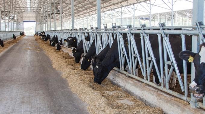 MODERN Koyun KEÇİ Çiftliği Kurma Projeleri ve Anahtar Teslim Maliyeti