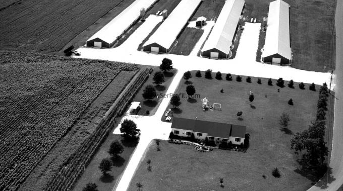 1000 Tavukluk Kümes Çelik İskeletli Prefabrik ve Çadır Anahtar Teslim Fiyatı