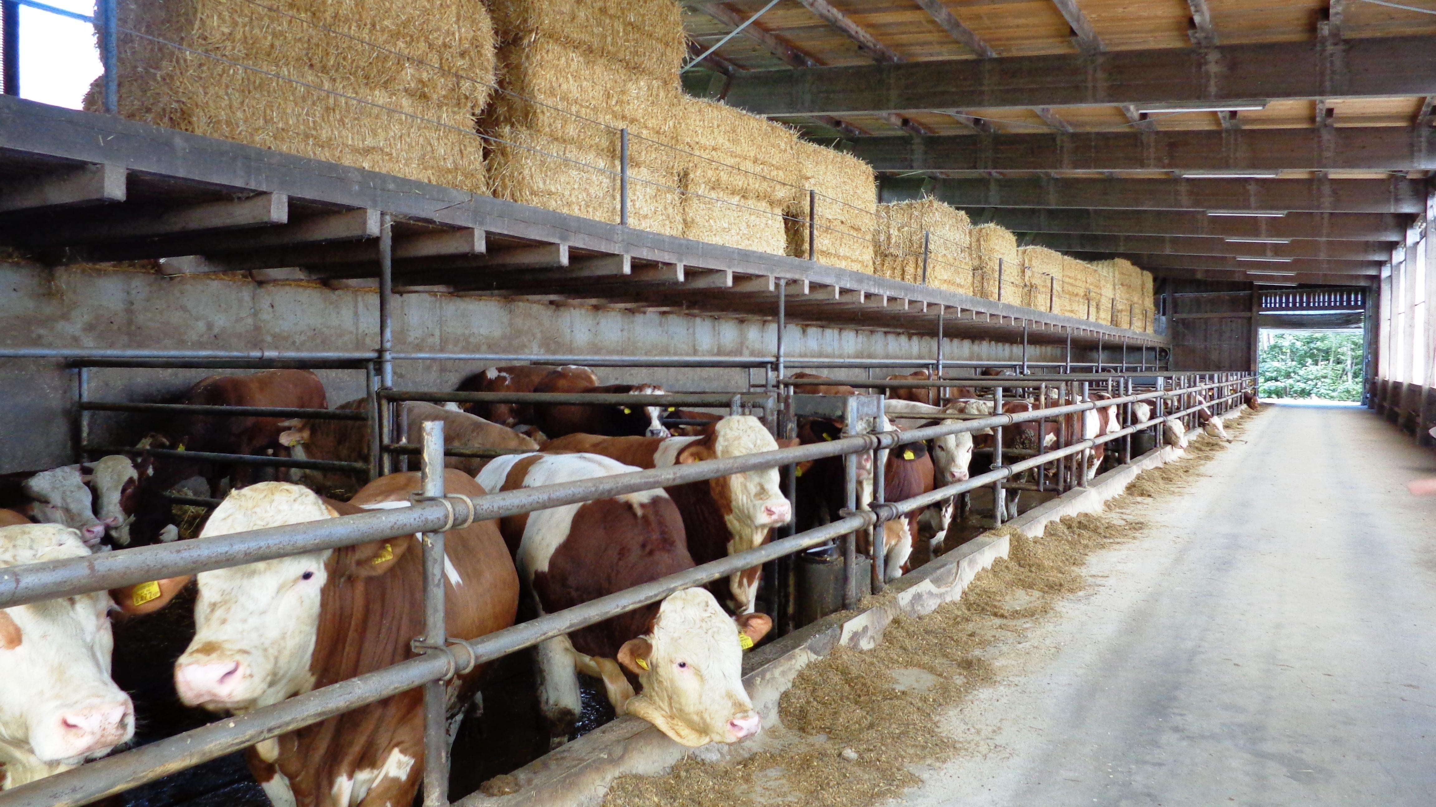 100 Başlık Süt Sığırcılığı Projesi İnşaat Yapım Kurulum Maliyeti Fiyatları 2017, 100 Başlık Süt Sığırcılığı Projesi İnşaat Yapım Kurulum Maliyeti 2017, 100 Başlık Süt Sığırcılığı Projesi İnşaat Yapım Kurulum Fiyatları 2017, 100 Başlık Süt Sığırcılığı Projesi İnşaat Yapım Maliyeti Fiyatları 2017, 100 Başlık Süt Sığırcılığı Projesi İnşaat Kurulum Maliyeti Fiyatları 2017, 100 Başlık Süt Sığırcılığı Projesi Yapım Kurulum Maliyeti Fiyatları 2017, Süt Sığırcılığı İnşaat Yapım Kurulum Maliyeti Fiyatları 2017, Süt Sığırcılığı Projesi İnşaat Kurulum Maliyeti Fiyatları 2017,   süt çiftliği kurulum maliyeti, 50 başlık süt sığırcılığı projesi maliyeti, 100 başlık süt sığırcılığı projesi maliyeti, 10 başlık süt sığırcılığı projesi maliyeti, 20 başlık ahır maliyeti, 100 başlık süt sığırcılığı projesi maliyeti 2017, 30 başlık ahır maliyeti, büyükbaş hayvan çiftliği devlet desteği, büyükbaş hayvan çiftliği satılık,