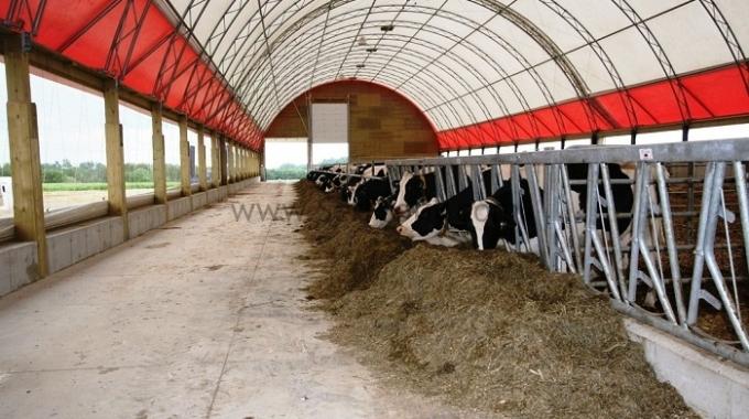 300 Başlık Germe Membran Sistem Et ve Süt Sığırı Çiftlik Ahırı Projeleri Fiyatı