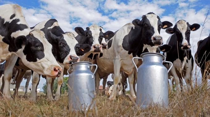 50 Başlık Ahır Projesi TKDK Kalkınma Ajansları Uyumlu Çiftlik Fiyatları
