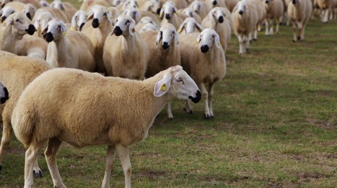 100-300 Baş Koyun Keçi Küçükbaş Hayvan Besiciliği Projeleri Yapım Fiyatları 2017