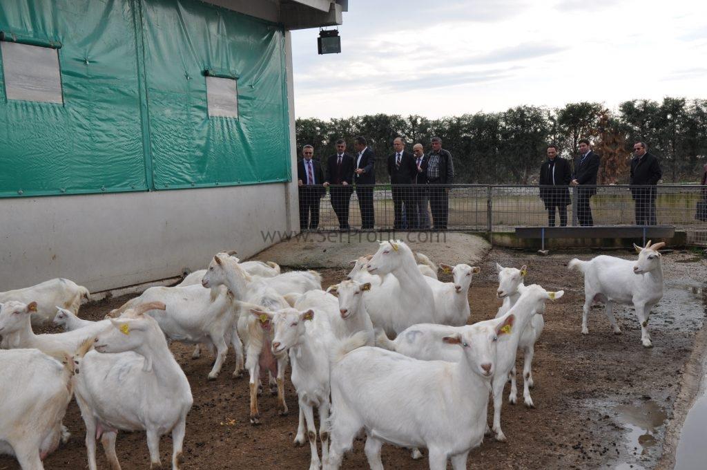 500 Küçükbaş Hayvancılık Saanen Keçi Fizibilitesi Projeleri İnşaat Yapım Fiyatları, 500 Küçükbaş Hayvancılık Saanen Keçi Fizibilitesi Projeleri İnşaat, 500 Küçükbaş Hayvancılık Saanen Keçi Fizibilitesi Projeleri Yapım Fiyatları, 500 Küçükbaş Hayvancılık Saanen Keçi Fizibilitesi İnşaat Yapım Fiyatları, 500 Küçükbaş Hayvancılık Saanen Keçi Projeleri İnşaat Yapım Fiyatları, 500 Küçükbaş Hayvancılık Keçi Fizibilitesi Projeleri İnşaat Yapım Fiyatları, Küçükbaş Hayvancılık Saanen Keçi Fizibilitesi Projeleri İnşaat Yapım Fiyatları,  Saanen Keçi Fizibilitesi Projeleri İnşaat Yapım Fiyatları,   50 baş saanen keçi fizibilitesi, koyun yetistiriciligi fizibilite, keçi yetiştiriciliği maliyeti, keçi yetiştiriciliği projesi, keçi yetiştiriciliği kitabı, keçi yetiştiriciliği nasıl yapılır, 1 keçinin yıllık maliyeti, keçi yetiştiriciliği karlı mı, büyükbaş hayvan besiciliği fizibilite,