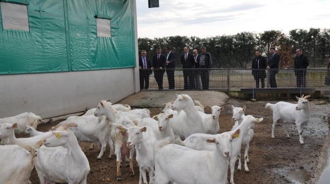 50 Küçükbaş Hayvancılık Saanen Keçi Fizibilitesi Projeleri İnşaat Yapım Fiyatları