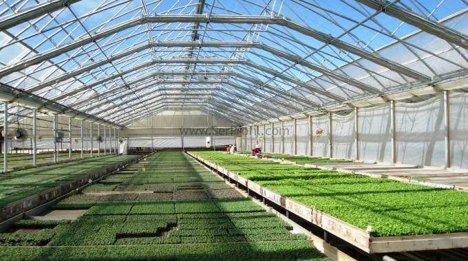 Aydın Seraları Salatalık Biber Patlıcan Domates Serası Sebze Yetiştiriciliği