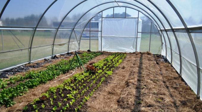 1 Dönüm HAZIR Çilek Serası Maliyeti Çilek Bahçesi Kurmak Kazançlı İşler Arasında