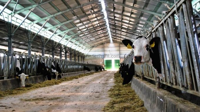 100 Büyükbaş Hayvan Süt Sığırcılığı Ahır Çiftlik Projesi Fiyatları