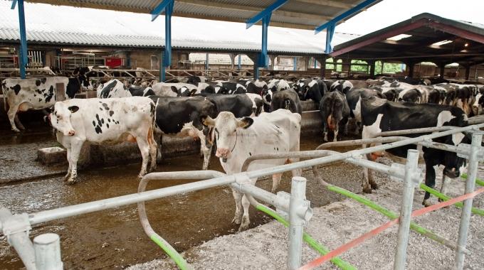 Besi Çiftliği Projeleri Fizibilite Raporları İnşaat Ekipman Fiyatları 2017