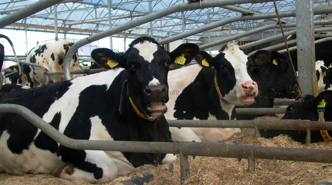 Örnek İnek Çiftlikleri, Örnek Ahır Projeleri ve Fiyatları 2017