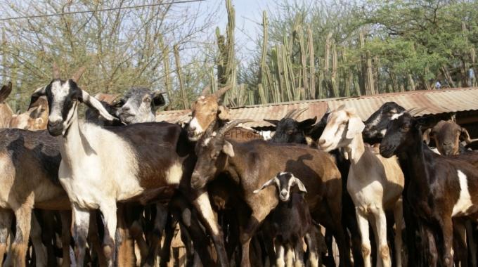 Keçi Çiftliği Devlet Desteği, Keçi Ahır Projeleri ve İnşaat Fiyatları