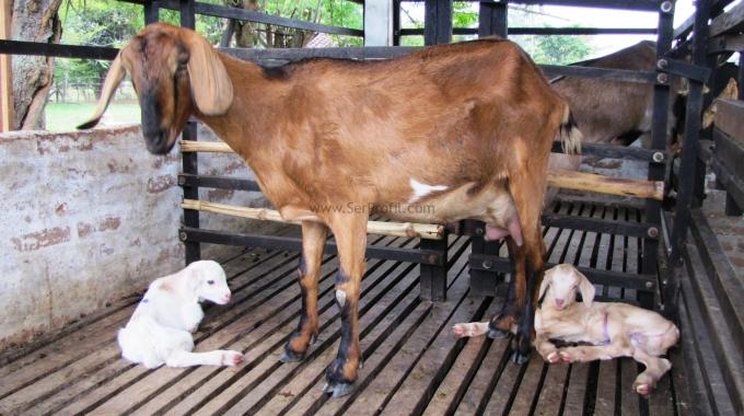 Küçükbaş Hayvancılık Ahır Projeleri Anahtar Teslim Yapım Fiyatları