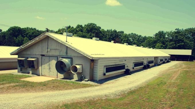 Anahtar Teslimi Tavuk Çiftliği Yapan Firmalar Fiyatları