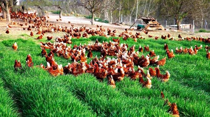 Prefabrik Tavuk Kümesleri Anahtar Teslim Proje ve Yapım Fiyatları