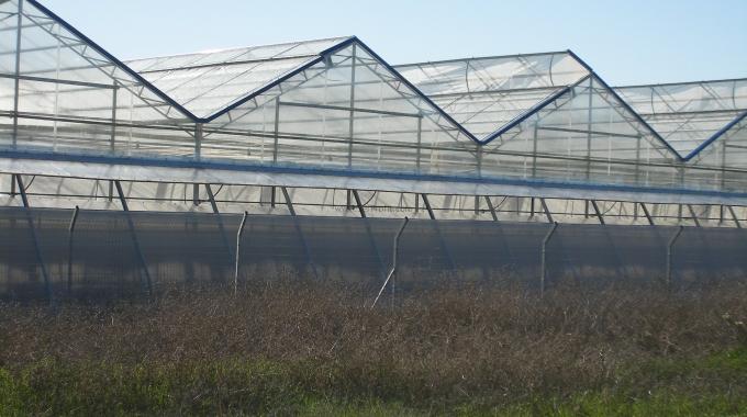 Topraksız Tarım Sera Yatırımı, Topraksız Tarım Sera Kurulum Maliyeti Sera Fiyatları