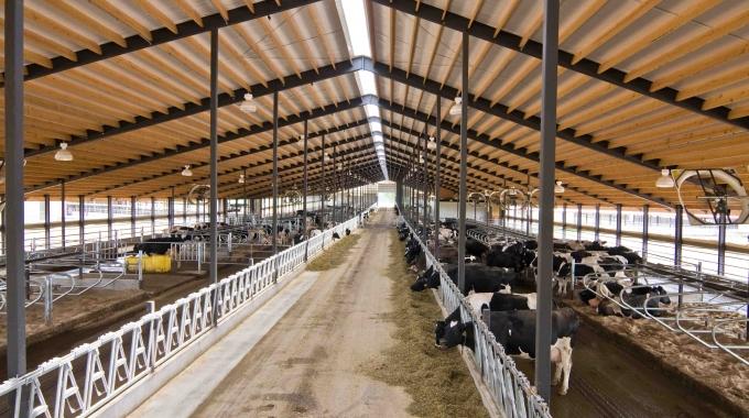 Büyükbaş Küçükbaş Hayvancılık Ahır Çiftlik Projeleri Hibe Destekleri 2017