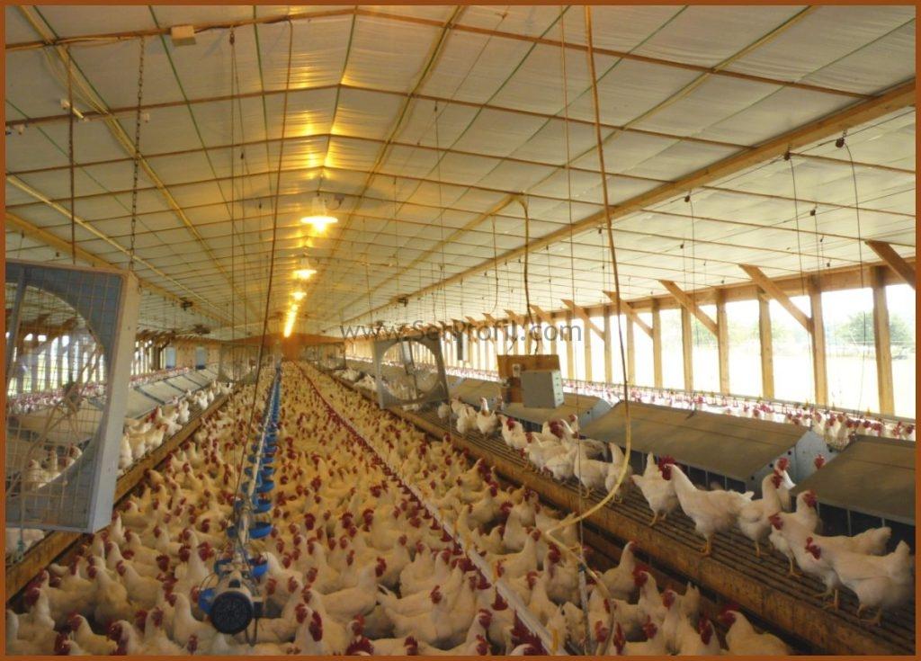 ÇELİK İskeletli Prefabrik Tavuk Kümesi Projeleri Yapım Fiyatları, prefabrik tavuk kümesi fiyatları, prefabrik tavuk çiftliği satılık, anahtar teslimi tavuk çiftliği yapan firmalar, satılık prefabrik tavuk kümesi, çadır tavuk kümesi fiyatları, 2 el prefabrik tavuk kümesi fiyatları, 500 tavuk için kümes, 1000 tavukluk kümes maliyeti, tavuk çiftliği nasıl kurulur+maliyeti nedir,