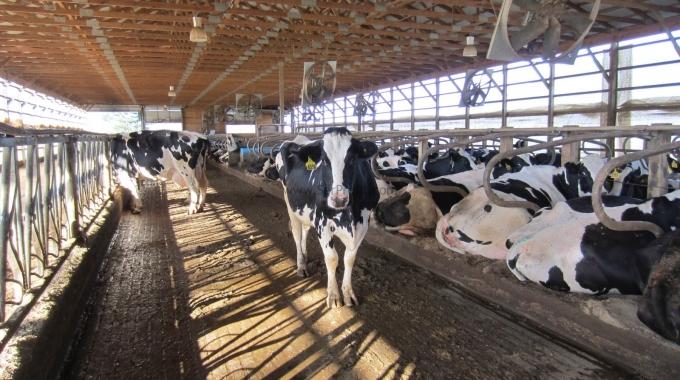 Büyükbaş Hayvan Çiftlik Yapımı Kurulum Maliyeti Projeleri Fiyatları 2017