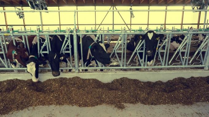 Süt İnek Çiftliği Projeleri, Anahtar Teslim Çiftlik Yapım Fiyatları