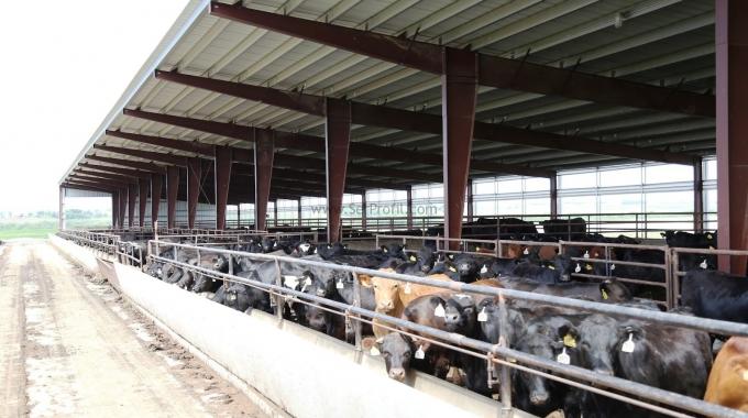 Tam Donanımlı MODERN Besi Süt Besiciliği Ahır Çiftlik Projeleri İnşaat Fiyatları