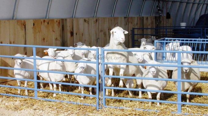 Küçükbaş Koyun Keçi Çiftliği Ağıl Projeleri Anahtar Teslim Kurma Maliyeti