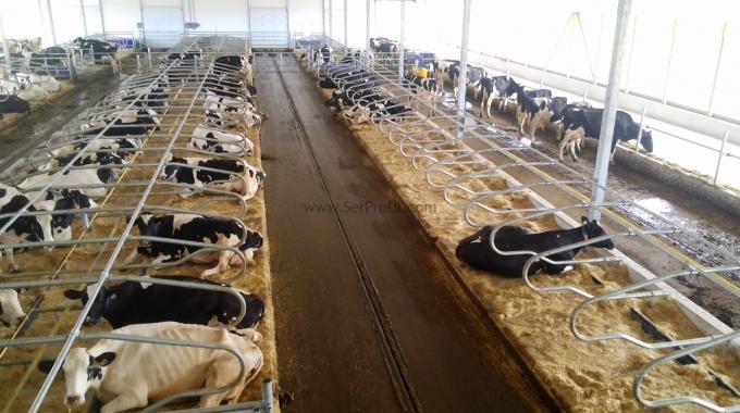 50 – 100 – 200 – 500 Büyükbaş Hayvan Ahırı Çiftlik İnşaat Proje Maliyeti Fiyatları