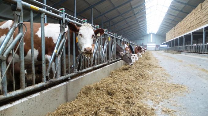 Besi Ahır Projeleri Maliyeti – Sütçülük Mandıra Çiftlik Projeleri Fiyatları