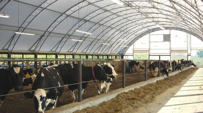 Büyükbaş Hayvancılık Besi Ahırı Çiftliği Projesi
