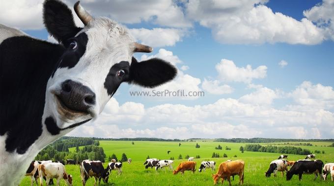 Hayvan Çiftlik Yapımı Zemin Betonarme Izgara,  Ahır Izgara Sistemleri Fiyatları