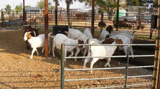 Keçi Koyun Çiftliği Projeleri İnşaat Ekipman Kurulum Maliyetleri